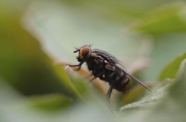 Insektengitter für Fenster und Türen gegen Fliegen